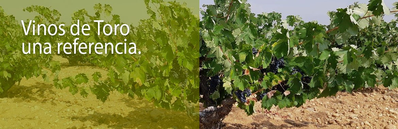 Vinos Toro